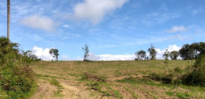 Sítio no Bairro Rio Negro – São Bento do Sul